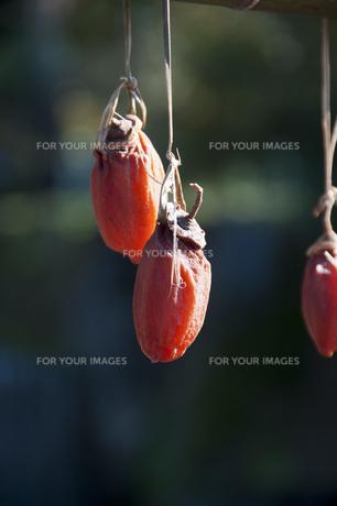 つるし柿の写真素材 [FYI00279979]