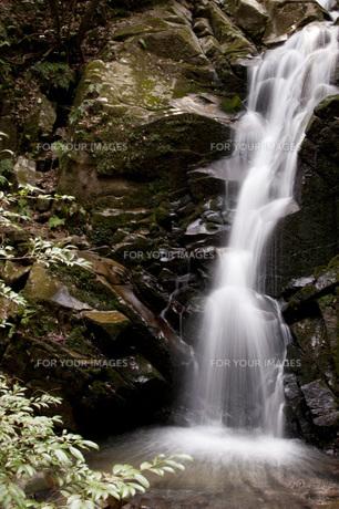 鶯と名のつく滝の写真素材 [FYI00279993]