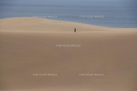 鳥取砂丘の写真素材 [FYI00280021]