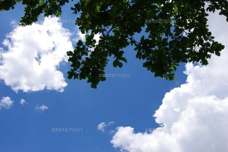 青空と新緑の写真素材 [FYI00280130]