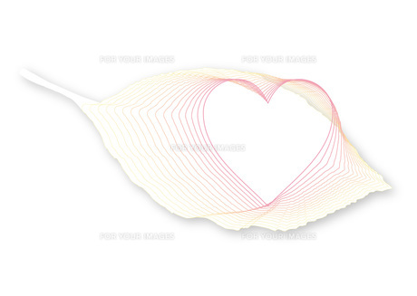 葉の中のハートマーク_「白」の写真素材 [FYI00280145]