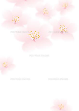 さくら花びらの写真素材 [FYI00280163]