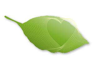 葉の中のハートマークの写真素材 [FYI00280165]