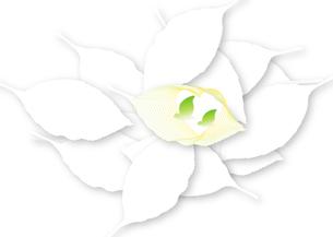 白い葉の中のハートマークと小鳥つがいの写真素材 [FYI00280166]