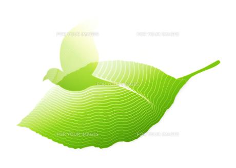 葉と小鳥の素材 [FYI00280168]