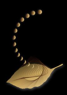 葉と月reversal_02の写真素材 [FYI00280170]