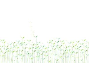 双葉背景用(ヨコ)の写真素材 [FYI00280184]