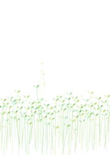 双葉背景用(タテ)の写真素材 [FYI00280186]