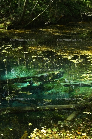 北海道・神の子池の素材 [FYI00280233]