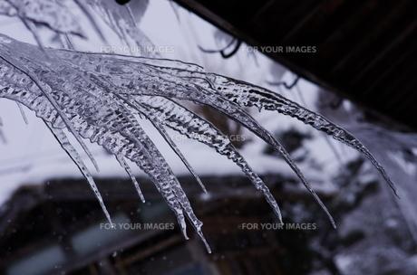 Ice Nailの写真素材 [FYI00280256]