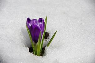 春の息吹の写真素材 [FYI00280295]