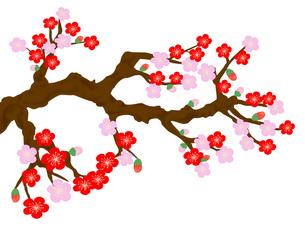 梅の木の写真素材 [FYI00280532]