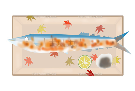秋刀魚の写真素材 [FYI00280544]