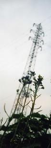 鉄塔とぺんぺん草の写真素材 [FYI00280711]