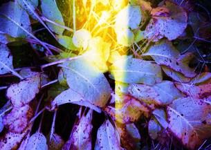 差し入る光 の写真素材 [FYI00280725]