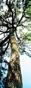 手を広げる木の写真素材 [FYI00280730]