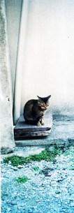 見つめるネコの写真素材 [FYI00280733]