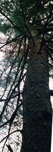 ある1本の木2の写真素材 [FYI00280736]