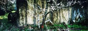 ある桜の日の写真素材 [FYI00280741]