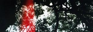 森の中にはしる赤い線の写真素材 [FYI00280744]