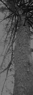 ある1本の木の写真素材 [FYI00280745]