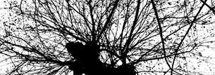 黒い木の写真素材 [FYI00280746]