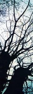 寂れた大木たちの写真素材 [FYI00280749]