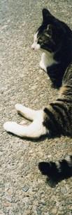人懐っこいネコの写真素材 [FYI00280750]