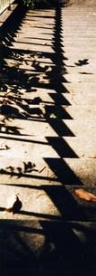 影る階段の写真素材 [FYI00280752]