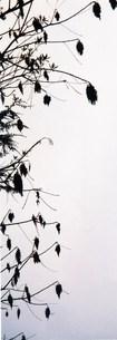 枯れ木伸びるの写真素材 [FYI00280753]