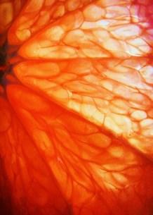ピンクグレープフルーツの写真素材 [FYI00280766]