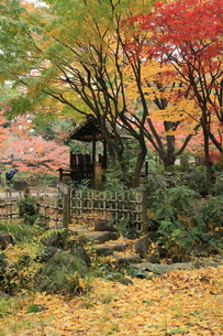 萌える秋の素材 [FYI00280806]