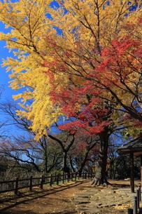 大倉山の紅葉の素材 [FYI00280820]