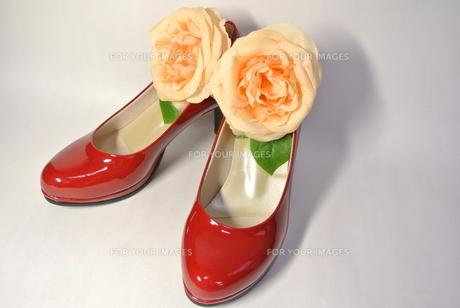 赤い靴とバラの写真素材 [FYI00280891]