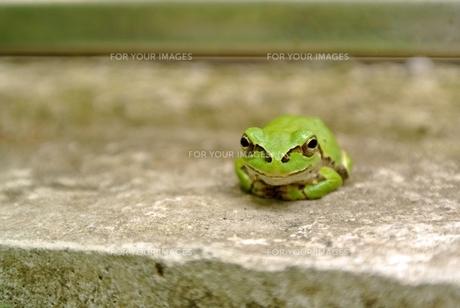 笑顔のカエルの素材 [FYI00280951]