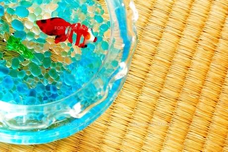 金魚鉢とたたみの写真素材 [FYI00280960]