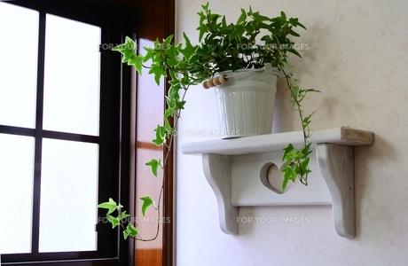 窓辺の棚と観葉植物の写真素材 [FYI00281040]