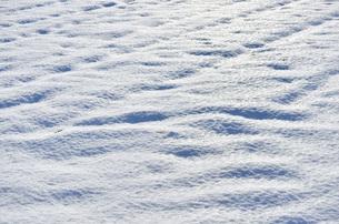 雪原の写真素材 [FYI00281162]