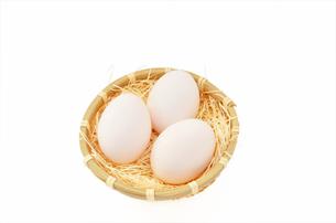 卵の素材 [FYI00281171]