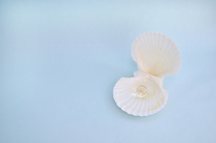 貝殻と宝石の素材 [FYI00281210]
