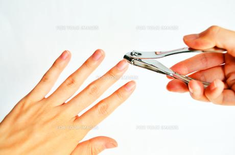 爪切りの素材 [FYI00281236]