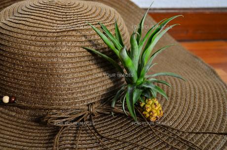 ミニパインと麦わら帽子の素材 [FYI00281249]