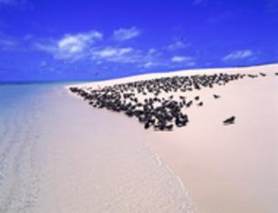 野鳥の楽園 オーストラリアのミコマスケイの写真素材 [FYI00282111]
