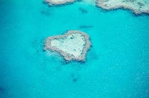 珊瑚礁のハートリーフの写真素材 [FYI00282144]
