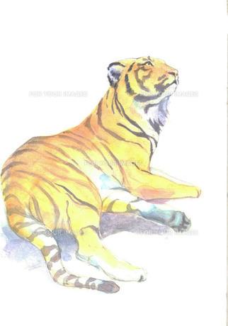 虎の写真素材 [FYI00282284]