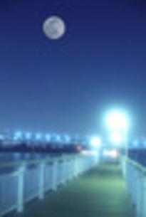 お台場で夜のお散歩の写真素材 [FYI00282317]
