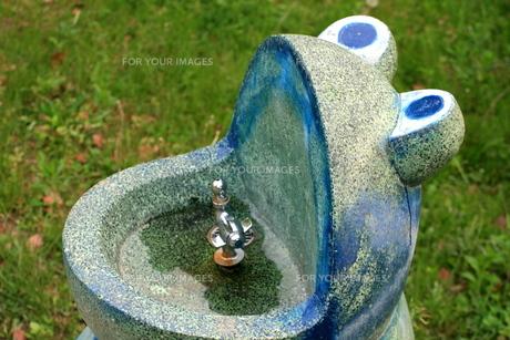 カエルの水飲み場の写真素材 [FYI00282371]
