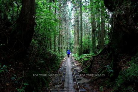 屋久島の林道の写真素材 [FYI00282595]