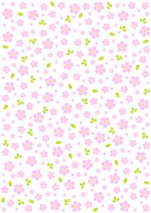 桜の背景模様の写真素材 [FYI00282631]