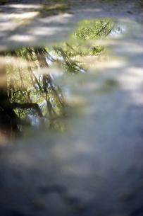 水たまりの写真素材 [FYI00283192]